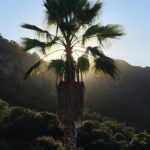 The Malibu Retreat Piuma (23)