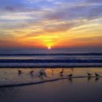 Wesley beach seagulls